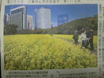 東京にも菜の花畑?