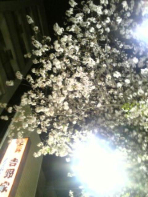 人形町の桜