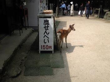 春日大社の鹿せんべい